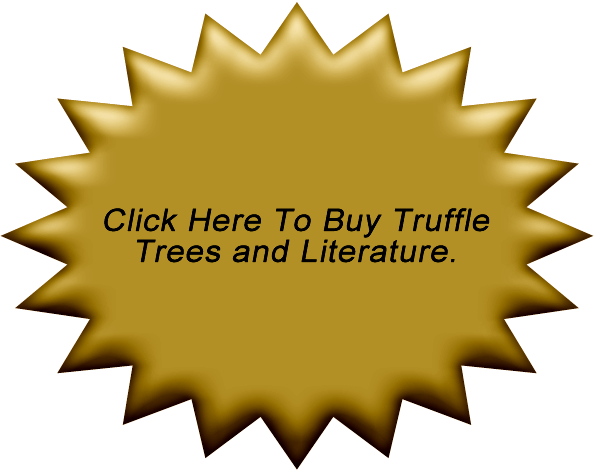 Buy Trees and Products