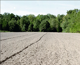 The field should be prepared at least six months prior to planting
