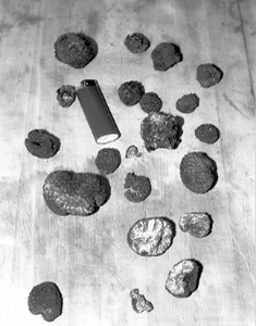 First truffles produced by Franklin Garland in Hillsborough, North Carolina